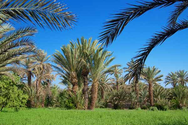 Palm Groves Hotels Morocco Book Cheap Palm Groves Hotels