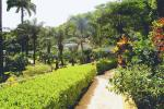 Blue Horizons Garden Resort Hotel Picture 11