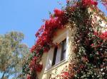 Residence Borgo degli Ulivi Hotel Picture 6