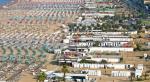 Villa Rosa Riviera Hotel Picture 38