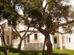 Cala Domingos Apartments Picture 2