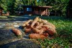 Yagoda Villas Picture 7
