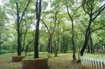 Dudhsagar Spa Resort Picture 13