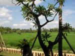 Green Field Hotel and Bungalows Picture 22