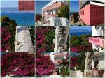 Apokoros Family Hotel Apartments & Studios Picture 4